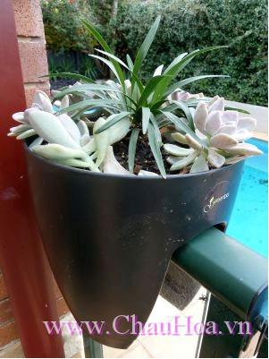 Chậu hoa Greenbo sen đá trang trí cho nhà bạn thêm xinh